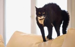 Помнят ли кошки тех, кого видят лишь изредка