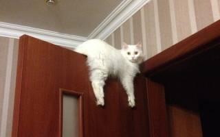 Кошачья сверхтякучесть и ее последствия: как спасти своего котика