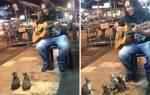 Четыре котенка пришли поддержать уличного музыканта