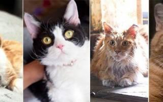 4 известных котика, покоривших мировой кинематограф. Часть вторая