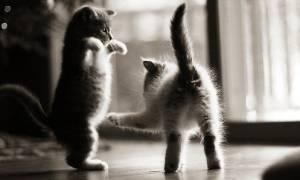 Новые фотографии самых милых на свете котят и котиков