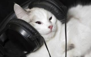 Музыка для кошек и котов: как влияет, откуда появилась