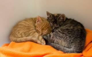 История о неразлучных крохах или два котенка брат и сестра