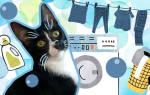 Котик выжил после нескольких минут в стиральной машине