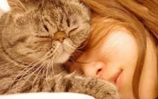 Сколько стоит содержать кошку и кота в месяц: подсчет по категориям