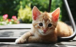 Вчера мы подобрали котенка с улицы или пополнение семейства