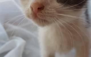 История о спасении маленького котенка у железной дороги
