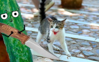 Почему коты боятся огурцов: ответы на все вопросы