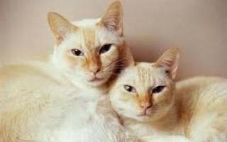 Кого выбрать, кота или кошку: мы поможем решить, кто лучше для вас