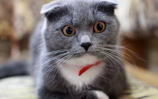 К чему снятся взрослые кошки и коты: сонники и разные толкования