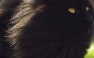 К чему снится черная кошка: различные толкования сновидения