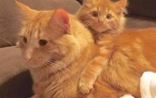 Крепкая дружба: рыжий котик и его маленькая копия неразлучны