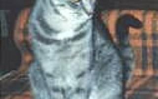 О говорящем коте. История от нашего подписчика.