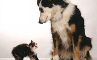ТОП способов подружить кошку с собакой в разном возрасте