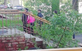В Кировске кот, пытаясь выскочить на улицу, застрял в окне
