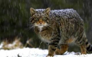 Крошечные котята найдены среди руин в Сирии