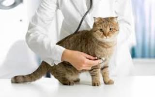 Как подготовить кота к кастрации: 3 правила и что взять с собой