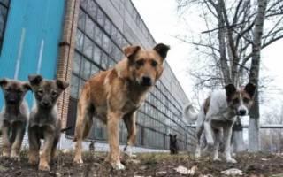 Кот Ричи – бессменный лидер собачьей стаи: теплый и большой