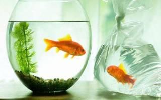 Какие аквариумные рыбки живут без кислорода и воздуха?