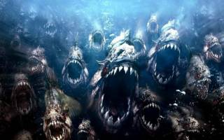 Хищные аквариумные рыбки: фото, названия, ссылки