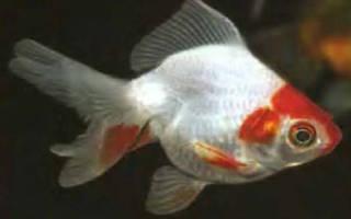 Корма Tetra (Тетра) для аквариумных рыбок