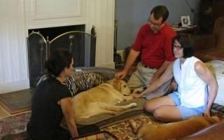 Лекарства для собак: инструкции, противопоказания, отзывы
