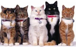 Ошейник для кошек с феромонами (успокаивающий): ТОП 4 марки