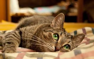 Книги про котов, кошек для детей и взрослых разных жанров, ТОП 10