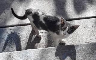 Бедная маленькая кошечка долго бродила в одиночестве по улицам, пока ее не нашел неравнодушный