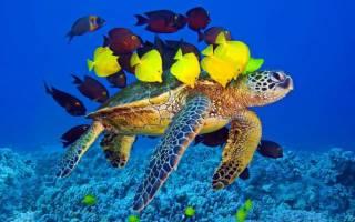 Аквариумные черепахи: популярные виды и совместное содержание с рыбками