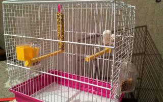 Самый большой попугай — особенности содержания в домашних условиях