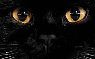 Почему нельзя смотреть кошке в глаза: мифы и суеверия