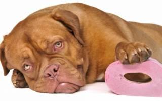 Понос у собаки: причины и что делать