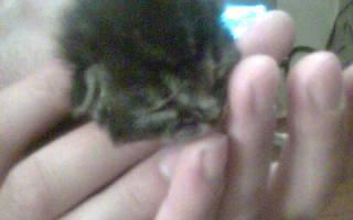 Новорожденный котенок в возрасте одного дня был вырван из лап смерти