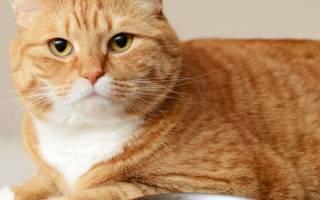 Как отучить кошку от сухого корма и перевести на натуральную пищу