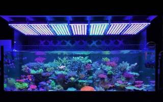 Освещение для аквариума своими руками ВИДЕОГАЛЕРЕЯ
