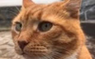 Символ Выборгского замка — рыжий кот по имени Филимон