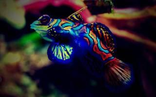 Аквариумные рыбки всех цветов: черные, красные, синие, оранжевые, желтые