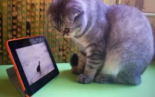 Как коты проводят время за компьютером (GIF подборка)
