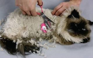 Колтуны у кошки: причины их появления, как избавиться и лечение