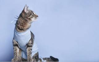 Как ухаживать за кошкой после стерилизации день за днем