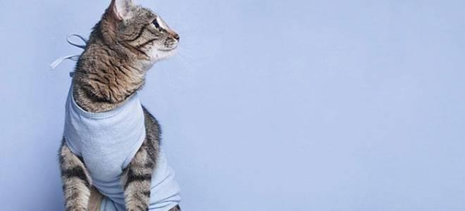 Чем кормить кошку после стерилизации в домашних условиях