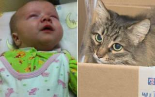 Как брошенных мтерью котят усыновила уличная собака