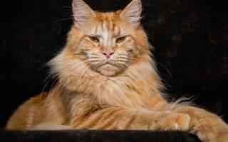 5 инопланетных пород кошек: описание внешности, характера, фото