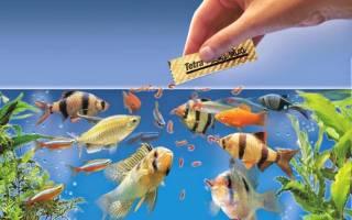 Чем кормить аквариумных рыбок: советы, рекомендации!