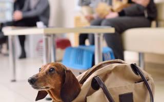Запор у собаки: что делать
