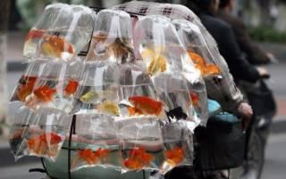 Сколько стоят рыбки или цена аквариумной рыбки?
