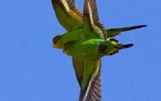 Виды попугаев — какие есть породы попугайчиков
