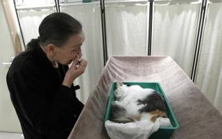 В каких случаях можно усыпить кошку?