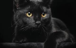 Мистика или домыслы: обида черного кота, правдивая история